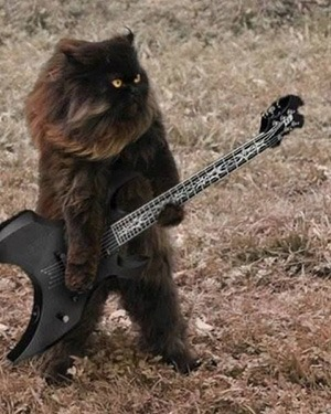heavy metal cat