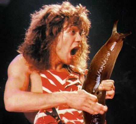 eddie van halen guitar solo slug